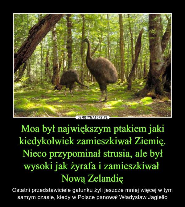 Moa był największym ptakiem jaki kiedykolwiek zamieszkiwał Ziemię. Nieco przypominał strusia, ale był wysoki jak żyrafa i zamieszkiwał Nową Zelandię – Ostatni przedstawiciele gatunku żyli jeszcze mniej więcej w tym samym czasie, kiedy w Polsce panował Władysław Jagiełło