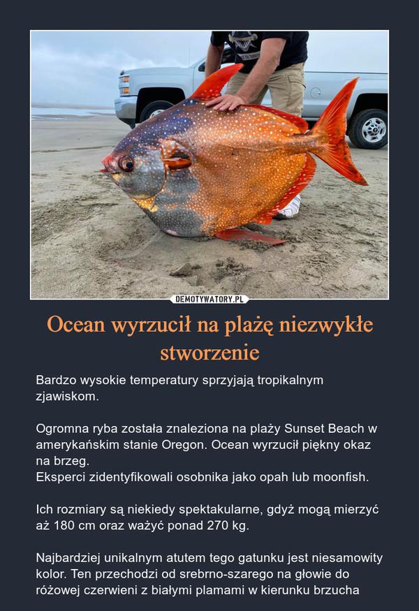 Ocean wyrzucił na plażę niezwykłe stworzenie – Bardzo wysokie temperatury sprzyjają tropikalnym zjawiskom.Ogromna ryba została znaleziona na plaży Sunset Beach w amerykańskim stanie Oregon. Ocean wyrzucił piękny okaz na brzeg.Eksperci zidentyfikowali osobnika jako opah lub moonfish.Ich rozmiary są niekiedy spektakularne, gdyż mogą mierzyć aż 180 cm oraz ważyć ponad 270 kg.Najbardziej unikalnym atutem tego gatunku jest niesamowity kolor. Ten przechodzi od srebrno-szarego na głowie do różowej czerwieni z białymi plamami w kierunku brzucha